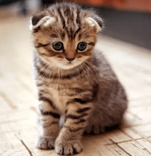 cute cat google